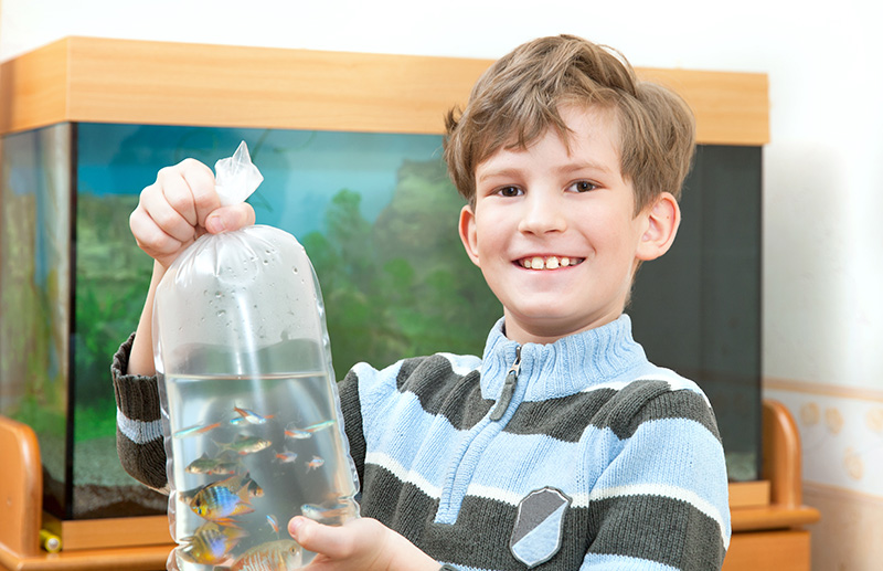 как запускать рыбок в аквариум фото