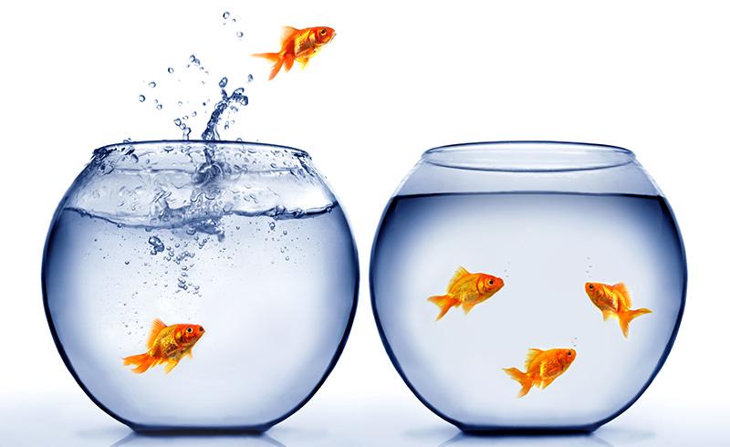 запуск рыбок в аквариум картинка