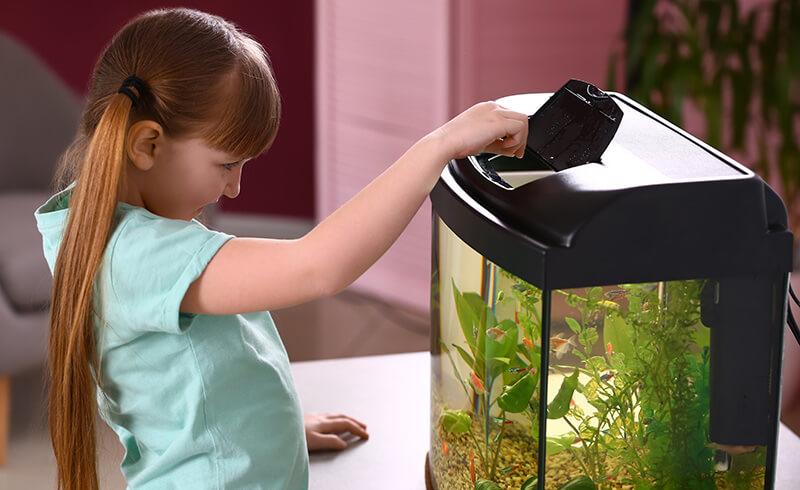 как правильно кормить рыбок фото