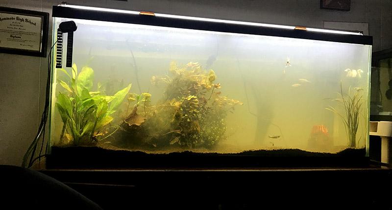 Почему в аквариуме мутнеет вода фото