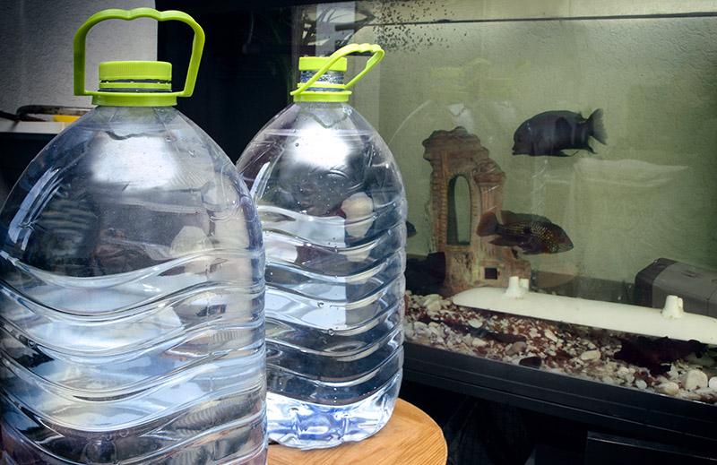 Сколько нужно отстаивать воду для рыб фото