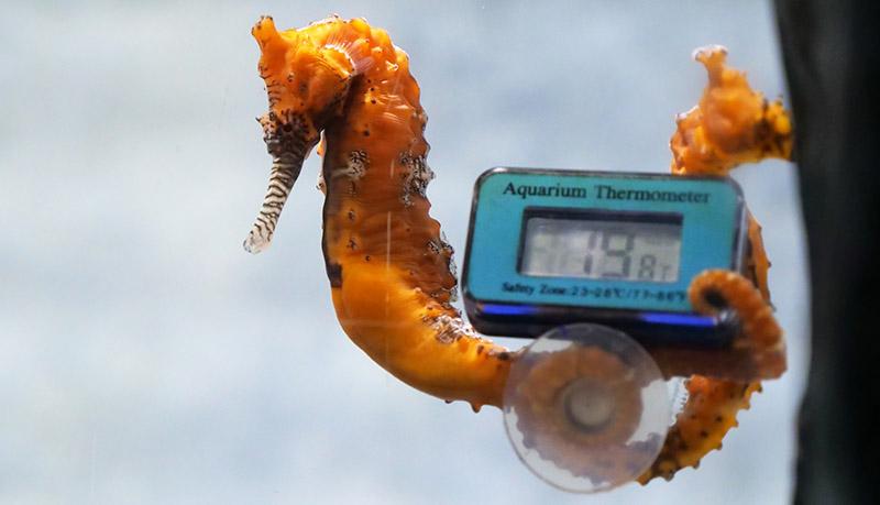 термометр для морского аквариума фото