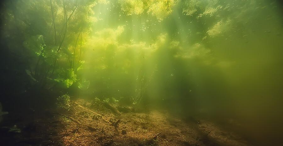 водоросли в аквариуме и природе фото