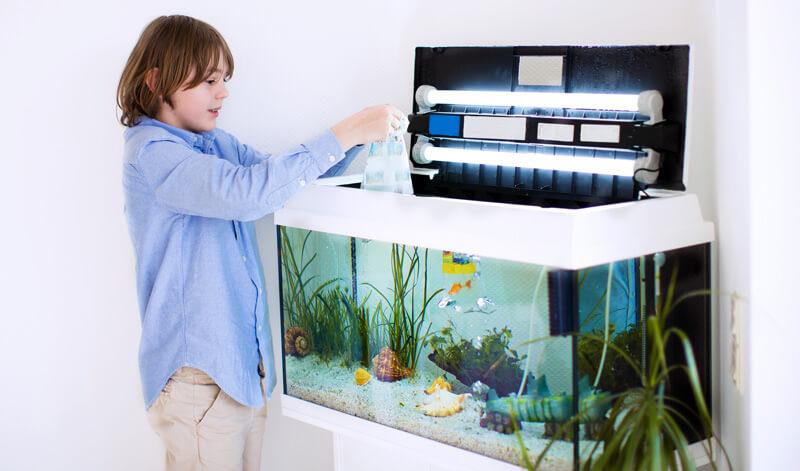 Запуск аквариума с нуля фото