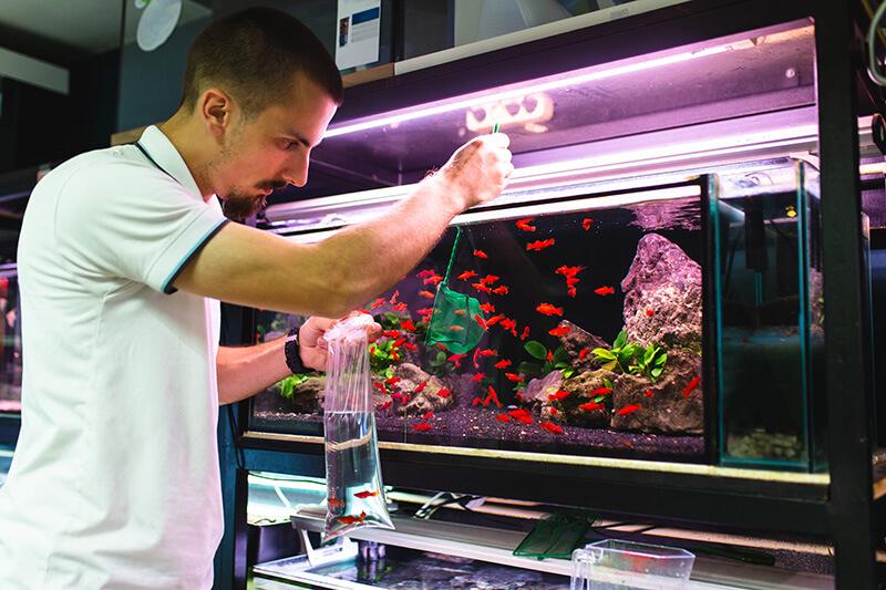сачок для аквариума фото