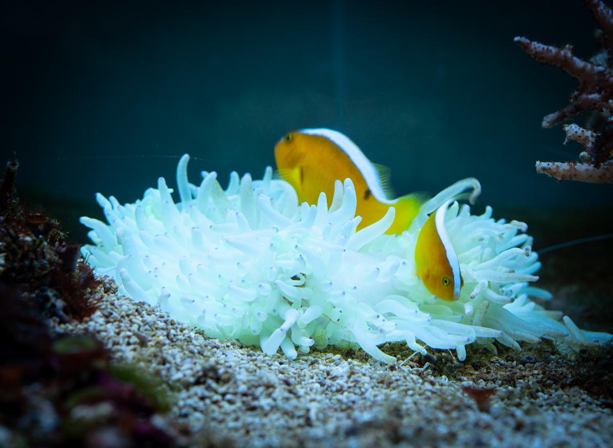 Поставка морских животных