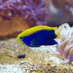 акваріуми корисні для душі ярлик