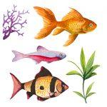 Рибки в ролі домашніх улюбленців ярлик