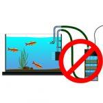 Запуск аквариума без оборудования