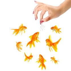 Как часто кормить рыбок