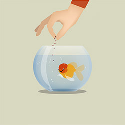 Как правильно кормить рыбок