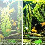 Почему в аквариуме мутнеет вода