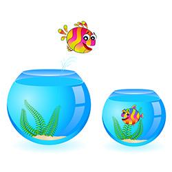 Как запускать рыбок в аквариум